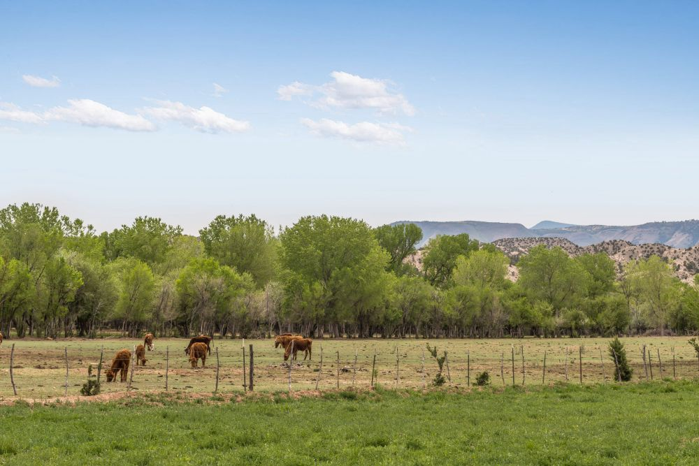medanales dating Find homes for sale and real estate in medanales, nm at realtorcom® search  and filter medanales homes by price, beds, baths and property type.