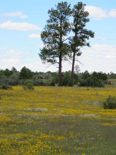 Flowered Meadow