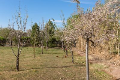 Orchard and grassy area