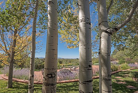 Looking through the Aspens to the Grand Patio and Mountains Beyond