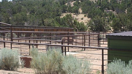 Cattle pens by the entrance