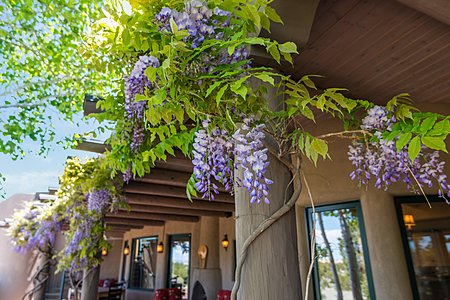 Back Covered Portal Draped with Wisteria