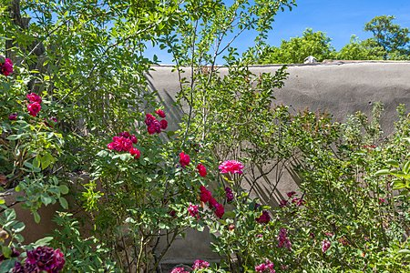 Garden with Rose's and various flowering plants