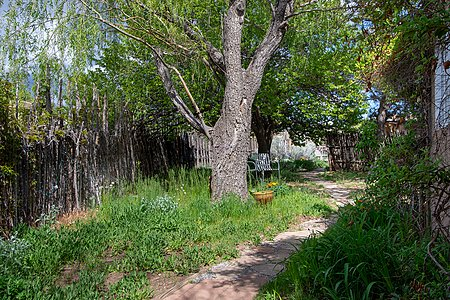 Lush and Private Front Yard with Mature Shade Trees