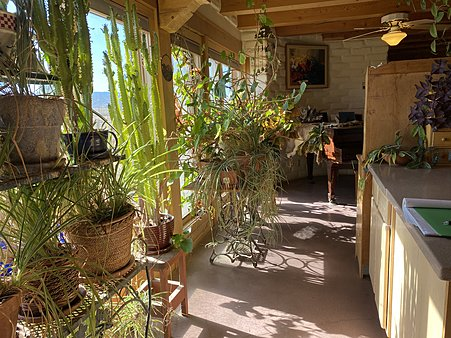 South Facing Windows in Kitchen for your houseplants
