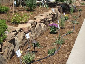 irrigation_drip_demo_garden